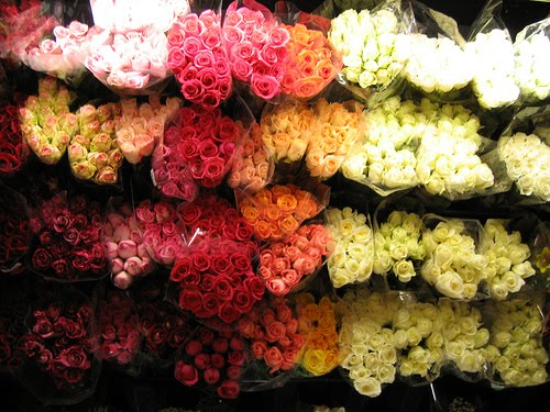[I+would+like+roses+in+every+colour+possible.jpg]