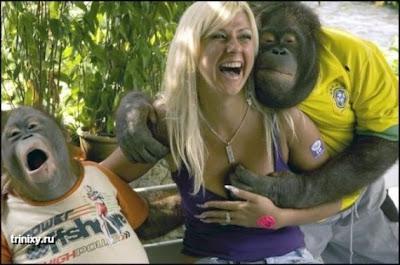 смешные фотографии обезьян