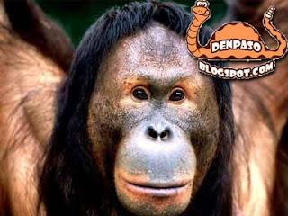 фото смешных животных обезьян