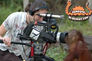 приколы обезьяны фото и видео