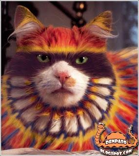 Фотоприколы и приколы YouTube видео кот