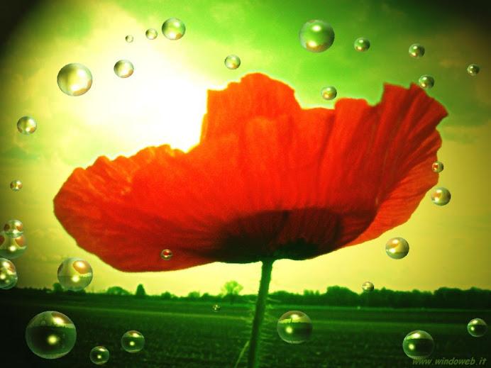 Come i fiori hanno bisogno della rugiada del mattino per stiracchiarsi ed aprirsi alla vita...