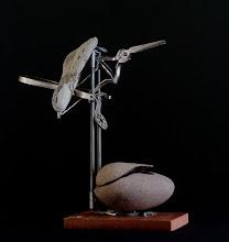 oiseau lithophage