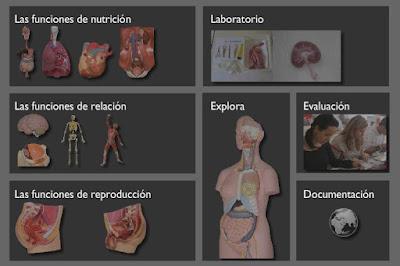 el cuerpo humano, aplicacion interactiva