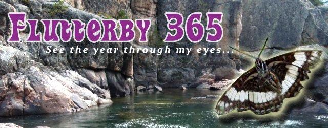 Flutterby 365