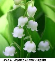 mayo mes des flores