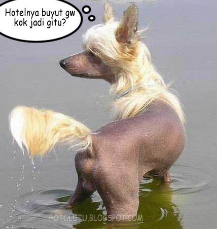 Anjing Pirang Lucu