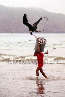 Burung Nakal Curi Ikan