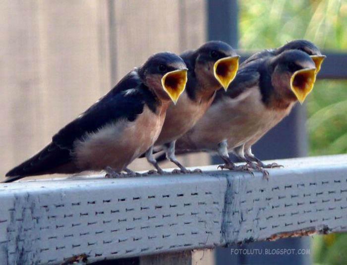 Burungnya kompak Mangap