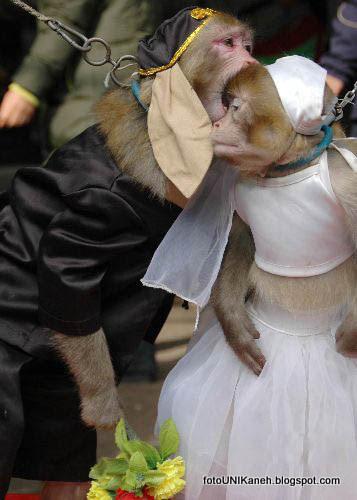 Cinta Monyet Apakah Perlu Dinikahkan?