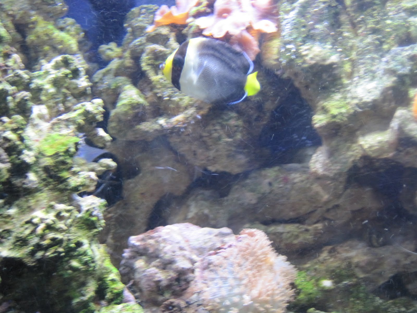 Are angelfish aggressive for Aggressive saltwater fish