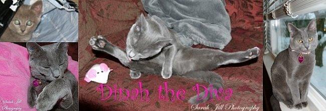 Dinah the Diva