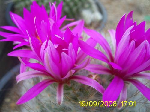 ดอกไม้แสนสวย