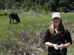 Moose Spotting In Algonquin Provincial Park