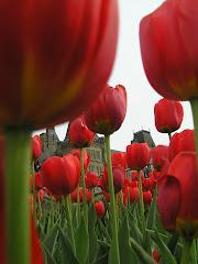 Ottawa and Tulip Time