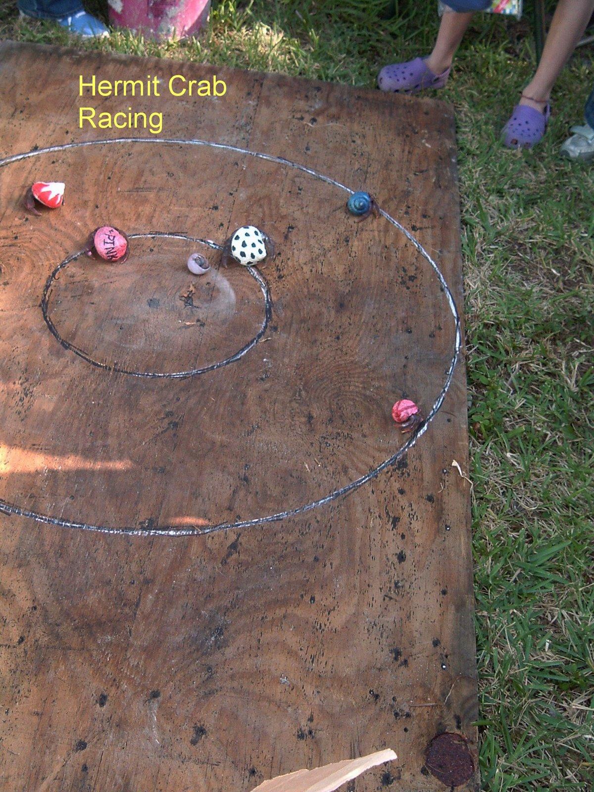 [hermit+crab+races.jpg+]