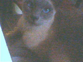 Epsilon mi gatito~♥ Epsilon my little cat~♥