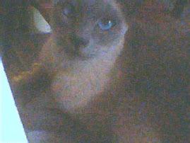 Epsilon mi gatito~♥ Epsilon my little cat~♥