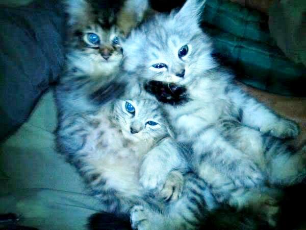 MIMI and BONG BABIES