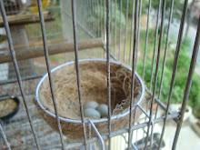 O primeiro ninho da temporada 2009!