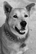 My Dingo Baby