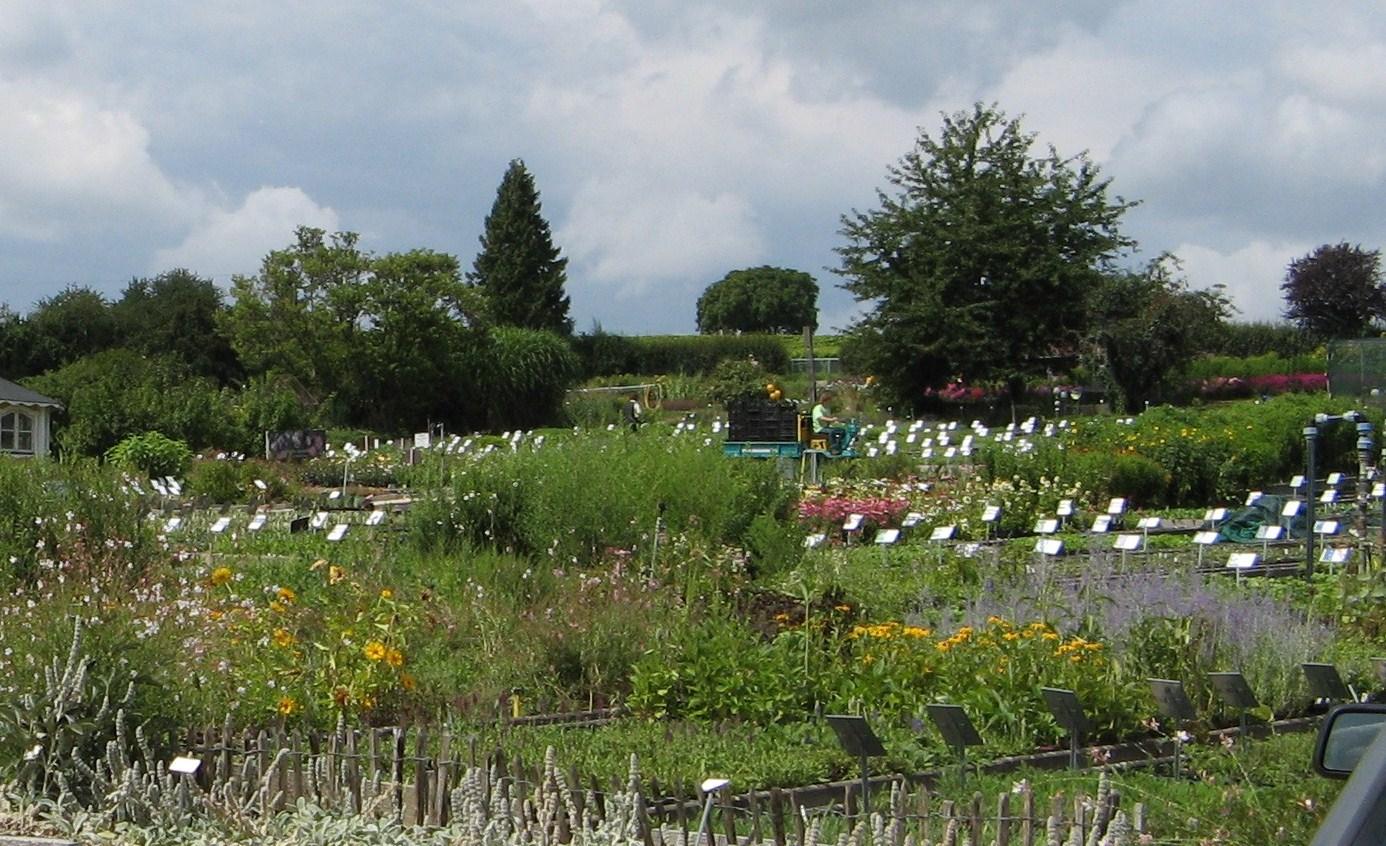 Le jardin de brigitte alsace petit tour chez la zeppellin - Petit jardin plan de la tour tours ...
