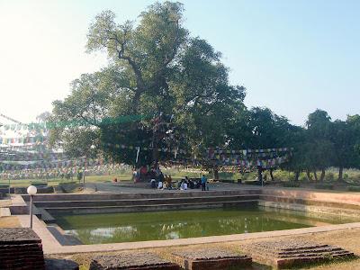 The Bodhi Tree, Buddhist Pilgrimage