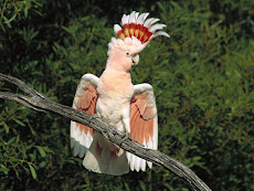 Que bela ave!Não é!!???