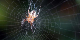 Wow Laba-laba Ternyata Juga Doyan Perawan