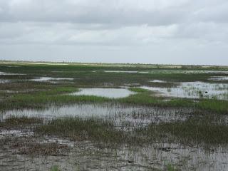 pantanos a caminho do delta