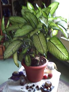 elviras versteck gr npflanzen in meiner wohnung