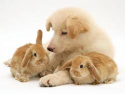 Σκυλάκι μαζί με κουνελάκια!