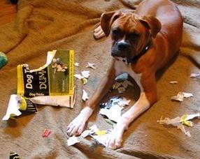Dog Obedience Training Books Uk