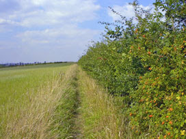 meridian hedgerow