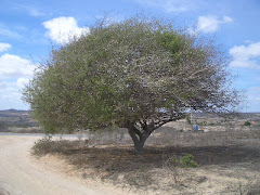 UMBUZEIRO