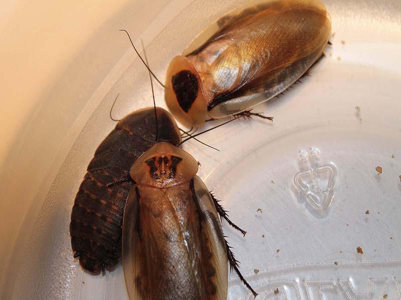 Roach(2).jpg