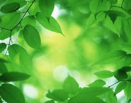 Warna hijau cenderung muda