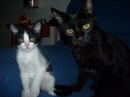 Mis gatos el negro se llama Salen y la gatita Toti jejejejeje