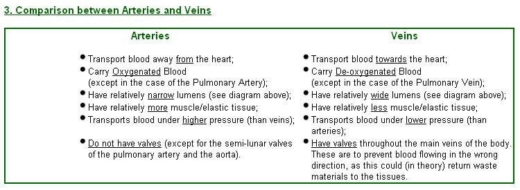 Arteries vs veins difference and