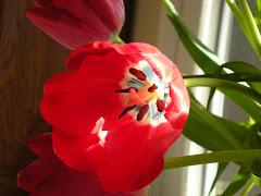 His Creativity: A Tulip