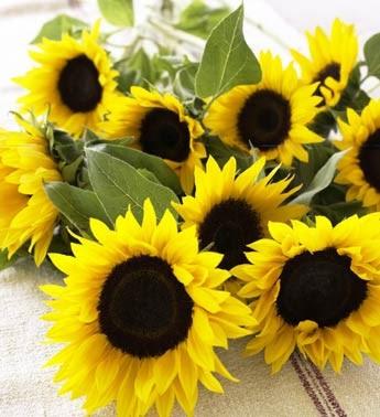 """●₪ مــــــزاجك """"بصـــــورة"""" ₪● - صفحة 2 Sunflower"""