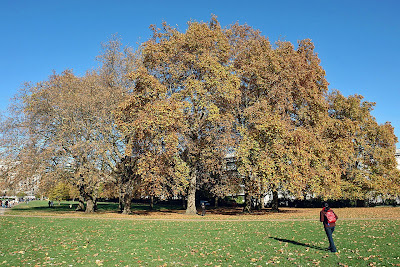 The beautiful autumn at the Green Park just outside Buckingham Palace