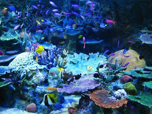 Tropical Fish Tank Info: Tropical Fish Tank Neon Lights