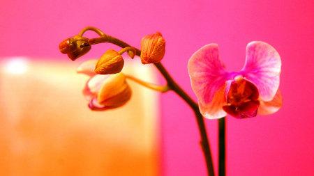 Decorar en colores c lidos - Imagenes de colores calidos ...