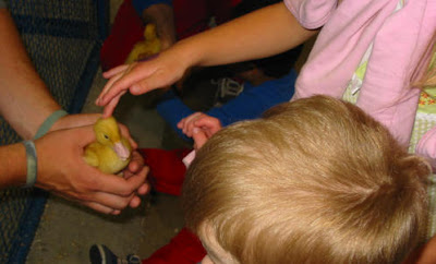 Pet the baby duckie