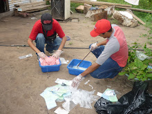 Voluntario en Isla Raton Amazonas