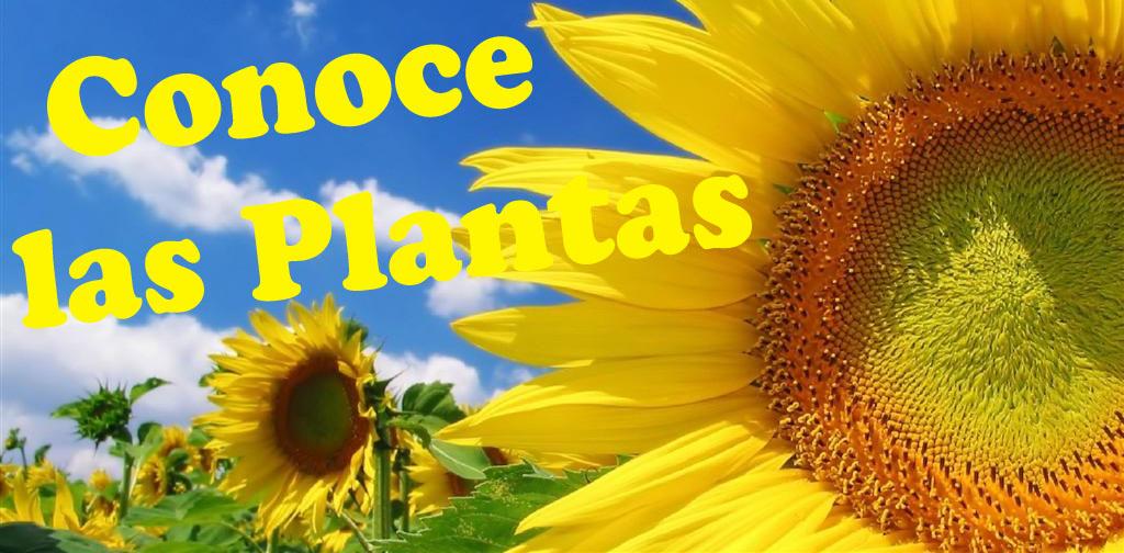 Conoce las Plantas