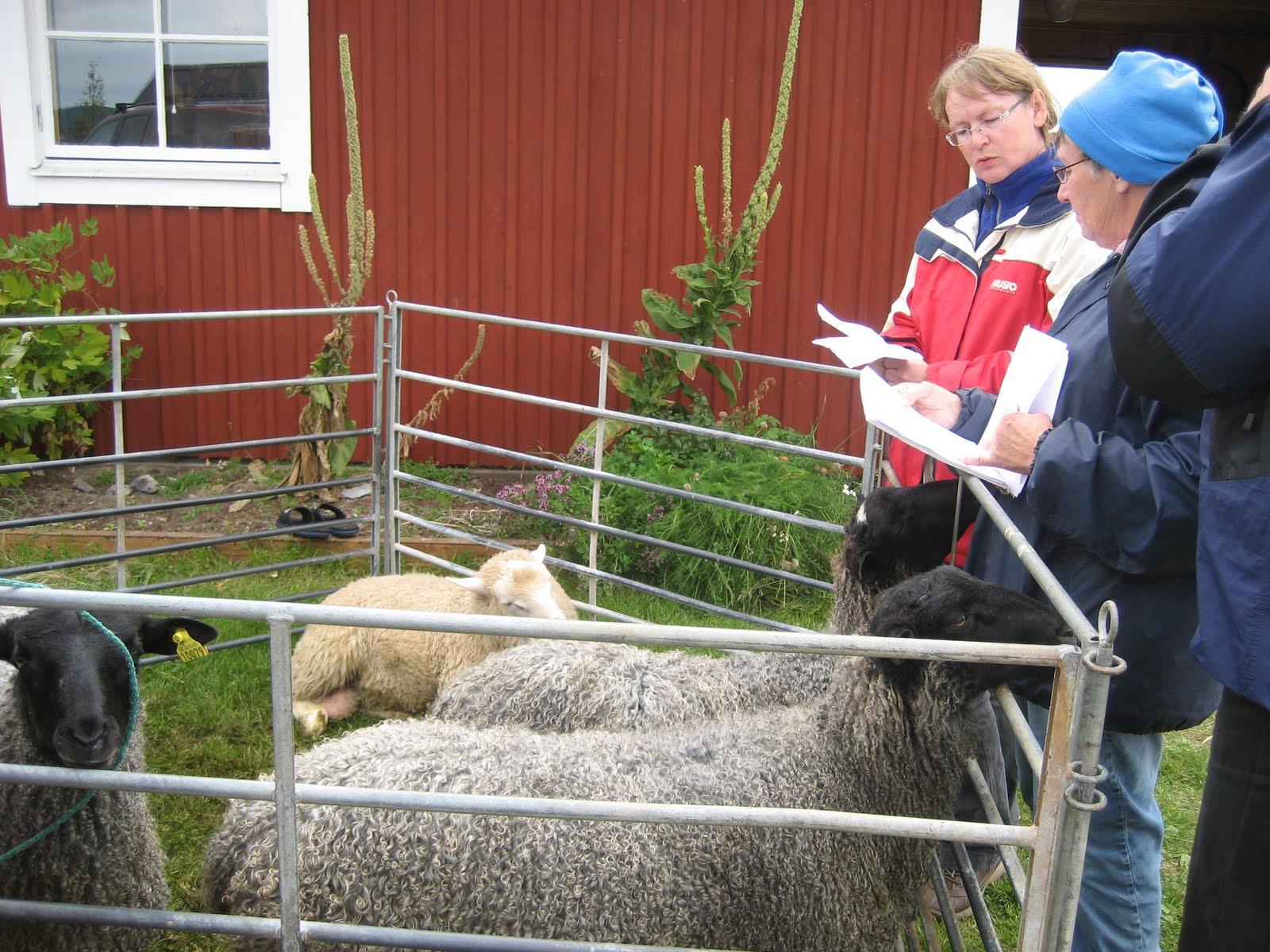 Dejting plocka upp linjer för killar rena