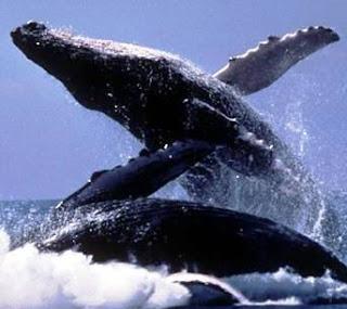 animales en extincion!!