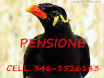 Pensione Merli